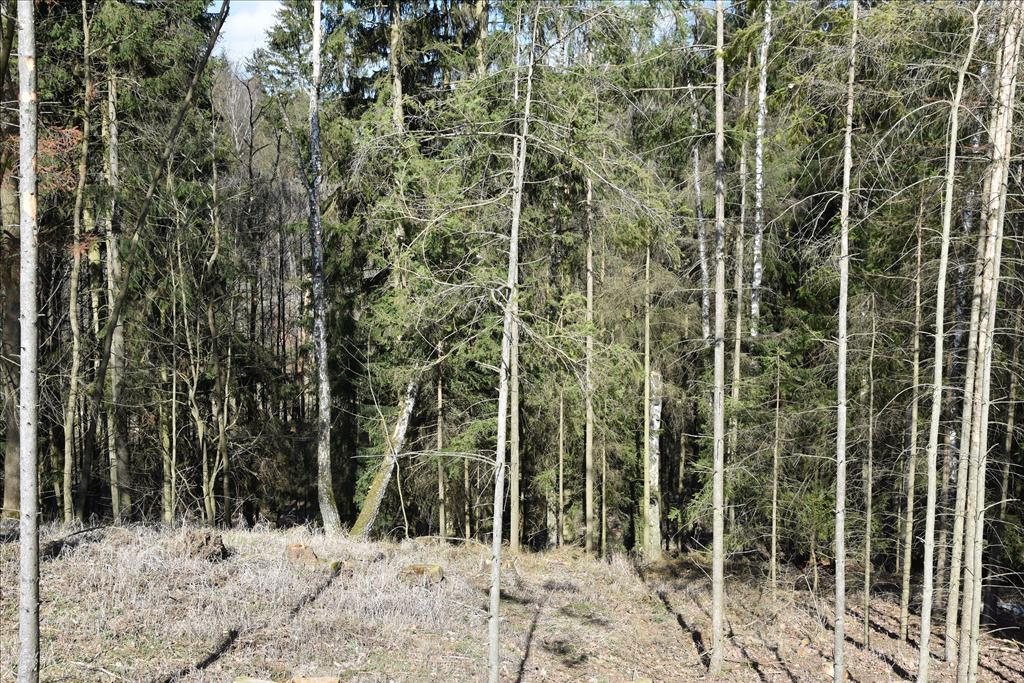Lesní pozemky