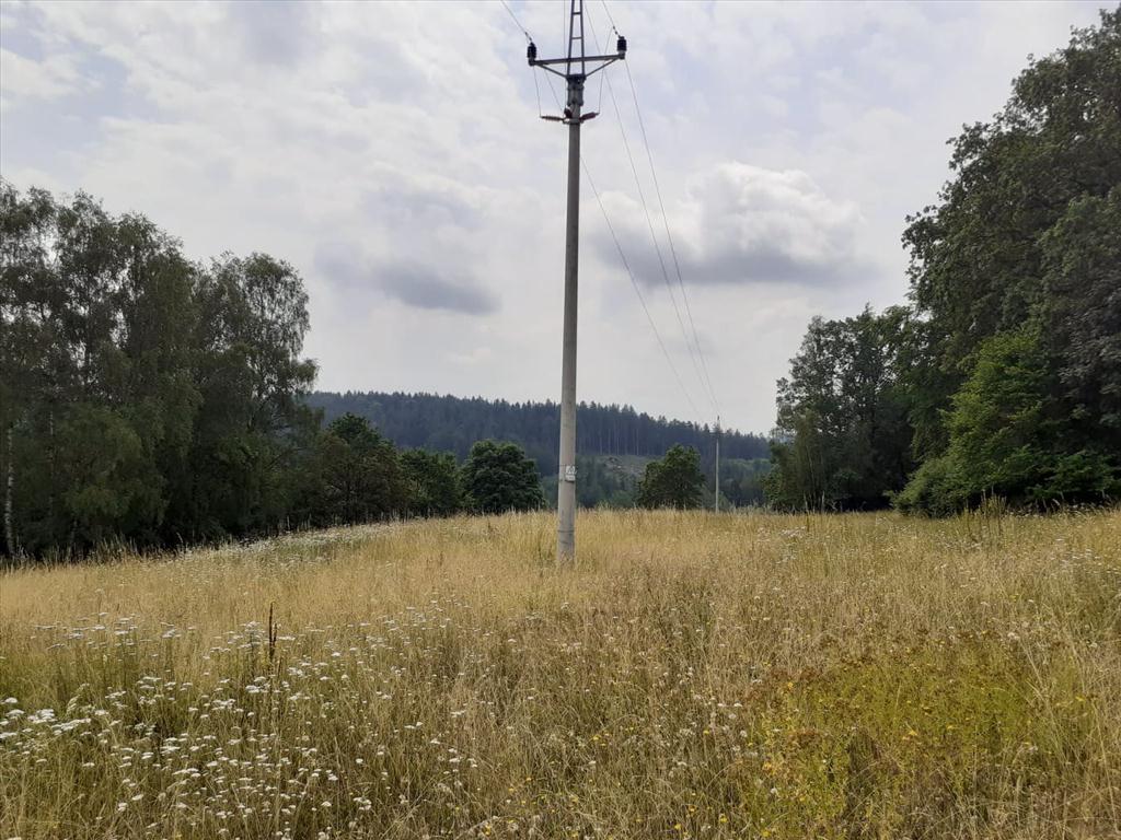 lesní pozemek2