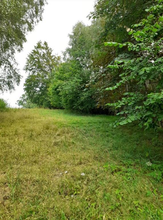 lesní pozemek3
