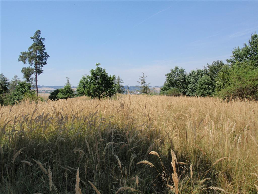 Územní pracoviště Brno III oznamuje konání veřejné dražby pozemků