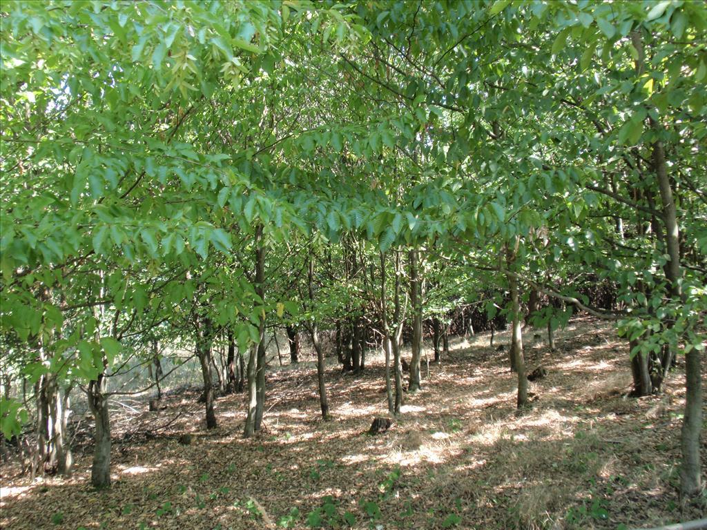 Lesní pozemek